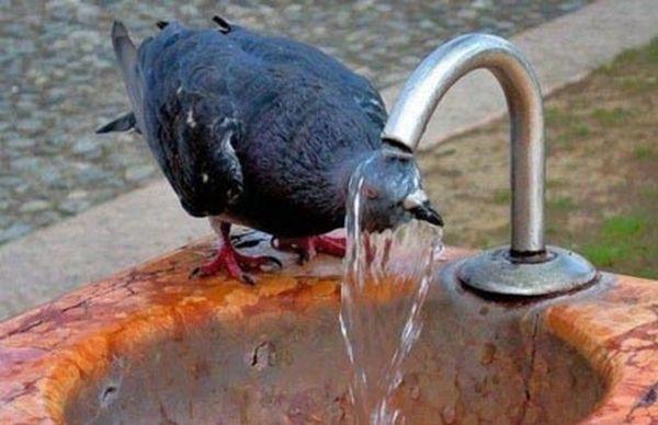 Uccellino sotto fontana