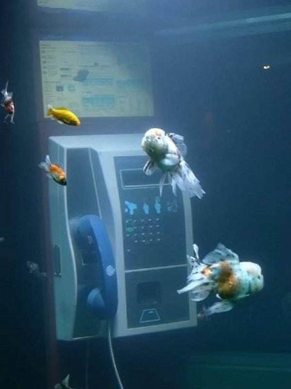cabina-acquario Lione 2