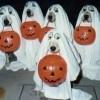Cani vestiti per Halloween