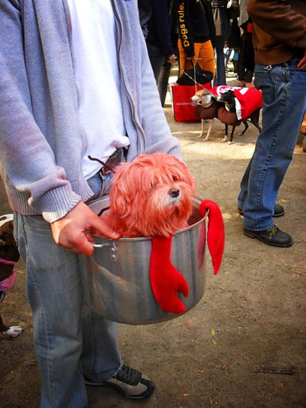 Halloween Dog Parade 1