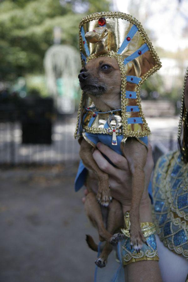 Halloween Dog Parade 3