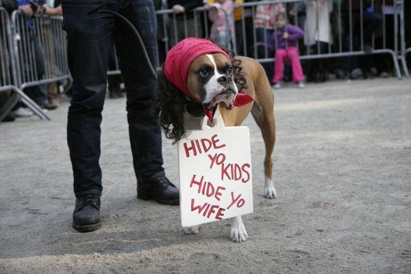 Halloween Dog Parade 5