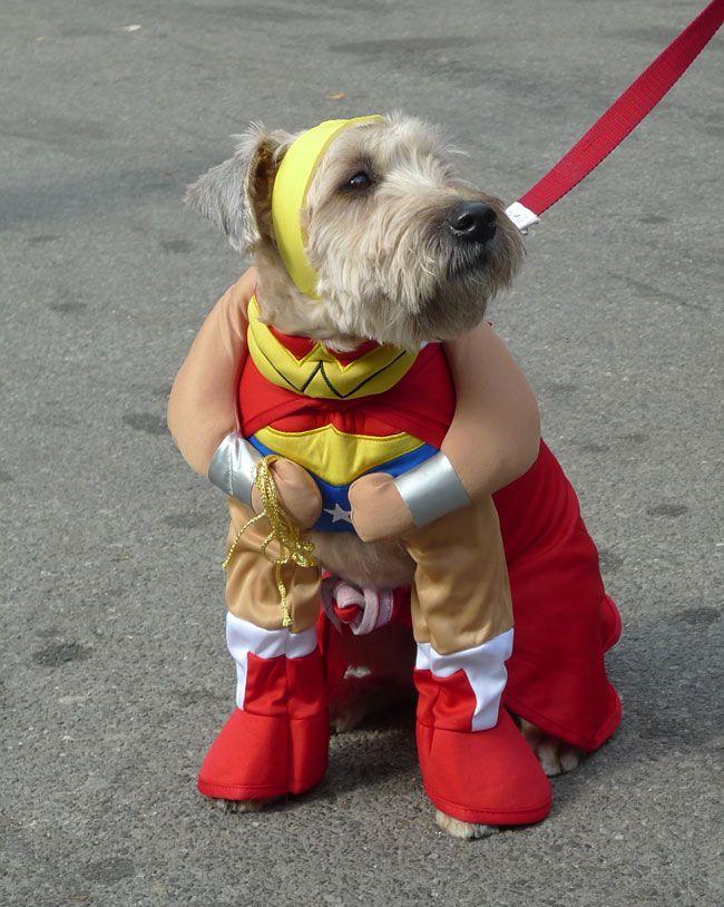 Halloween Dog Parade 6