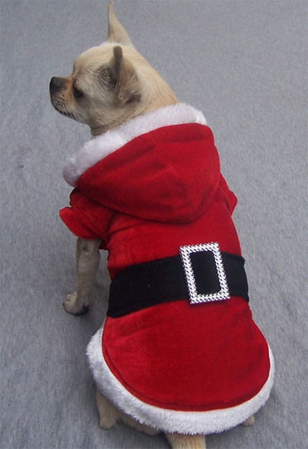 Cane Babbo Natale