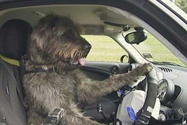 cani al volante 1