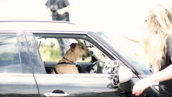 cani al volante 2