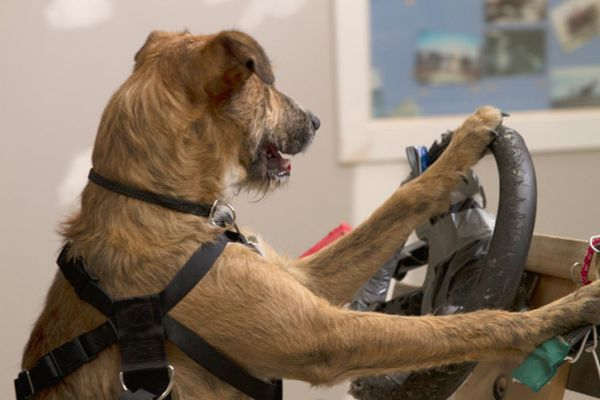 cani al volante 3