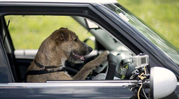 cani al volante: Porter
