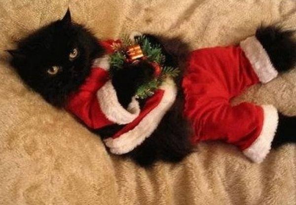 Gatto nero Babbo Natale