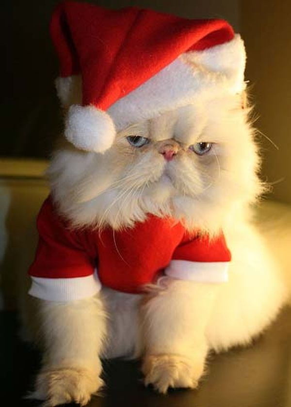 Gatto bianco Babbo Natale