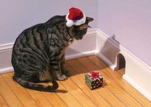 Gatto offre regalo al topo