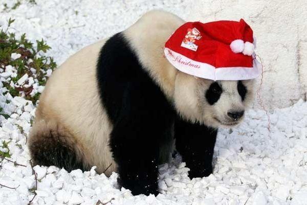 Panda con cappello natalizio