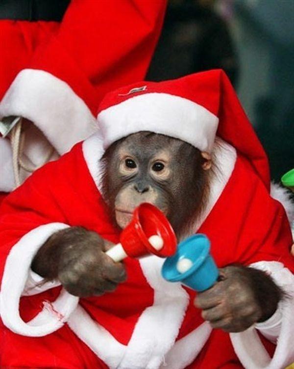 Scimmietta natalizia