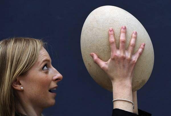 Uovo Madagascar in mostra