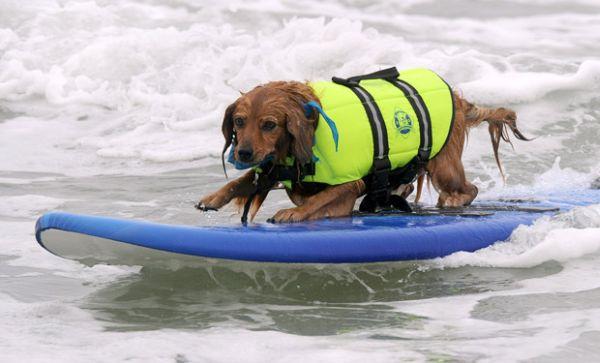 City Surf Dog 1