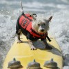 City Surf Dog 2