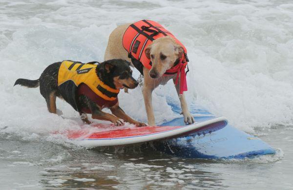 City Surf Dog 3