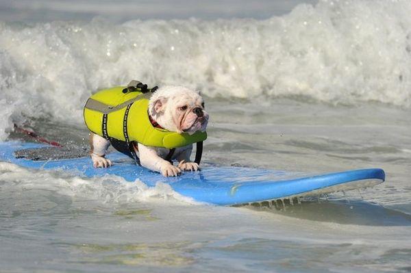 City Surf Dog 5