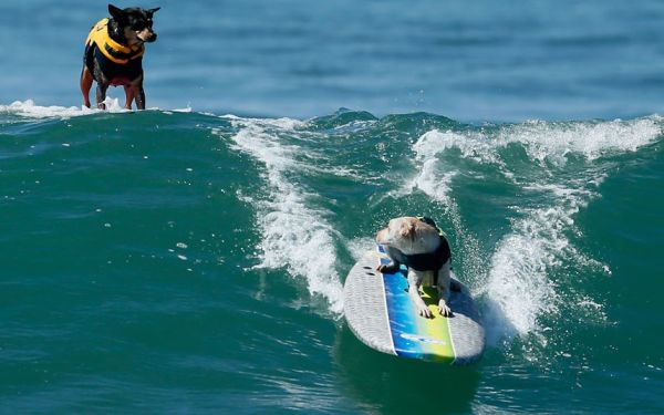 City Surf Dog 6