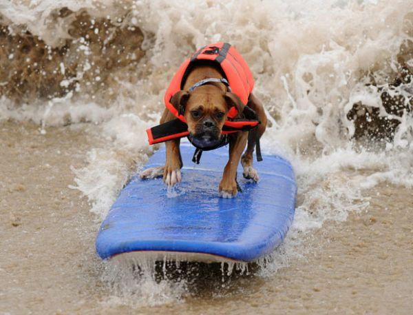 City Surf Dog 7