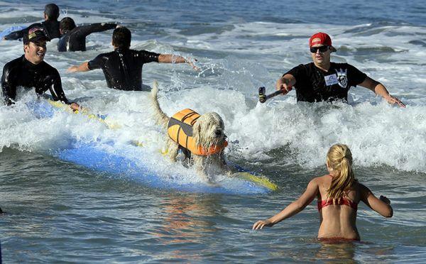 City Surf Dog 8