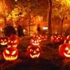 Halloween: zucche
