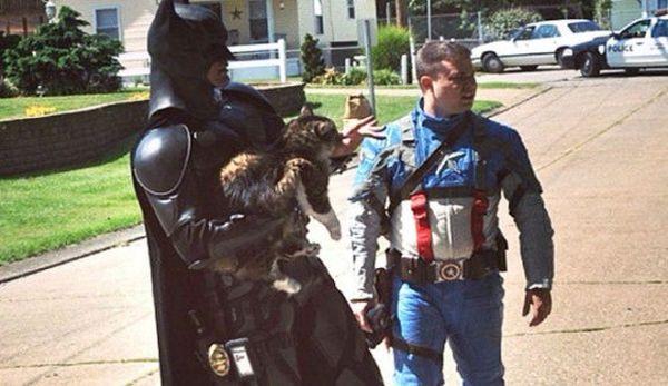 Batman e Capitan America salvano gatto