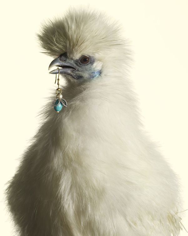 luxury chicks 1