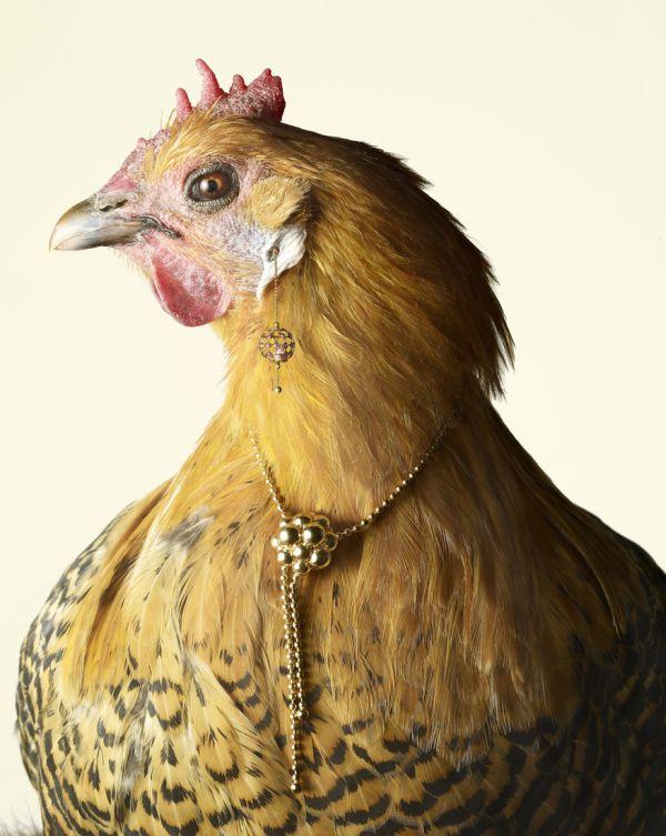 luxury chicks 2