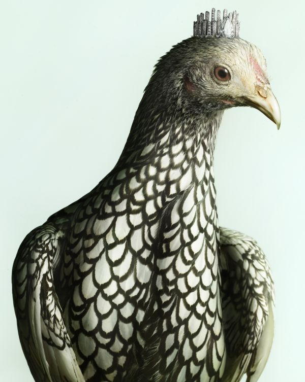 luxury chicks 4