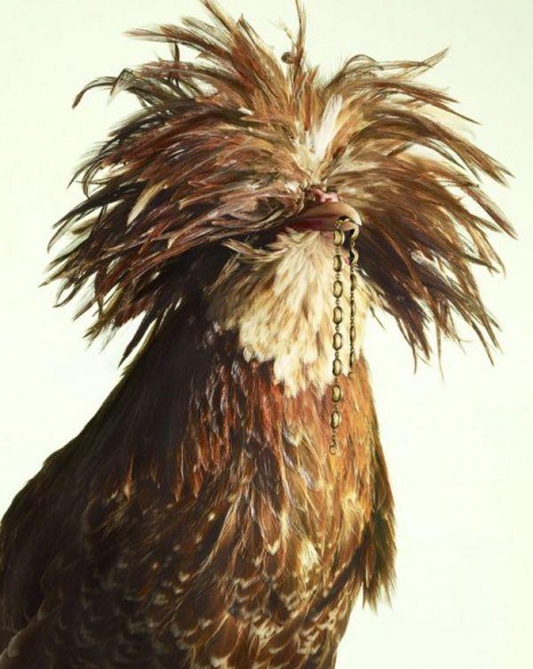 luxury chicks 6