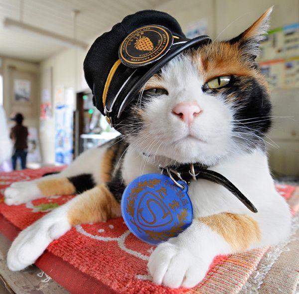 Tama: gatto-capostazione 1