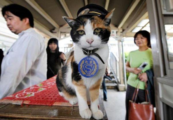 Tama: gatto-capostazione 2