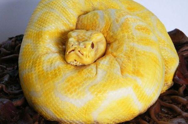 Torta a forma di serpente 1