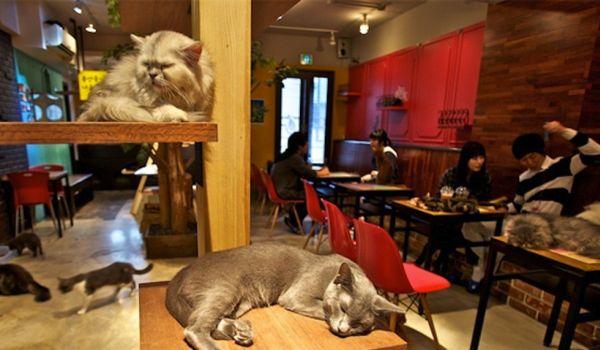 Cat Cafè