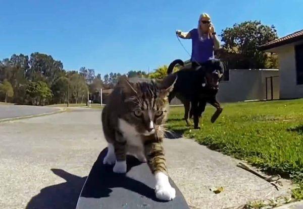 Didga: gatto fenomeno dello skateboard