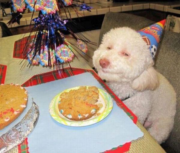 cane che festeggia compleanno