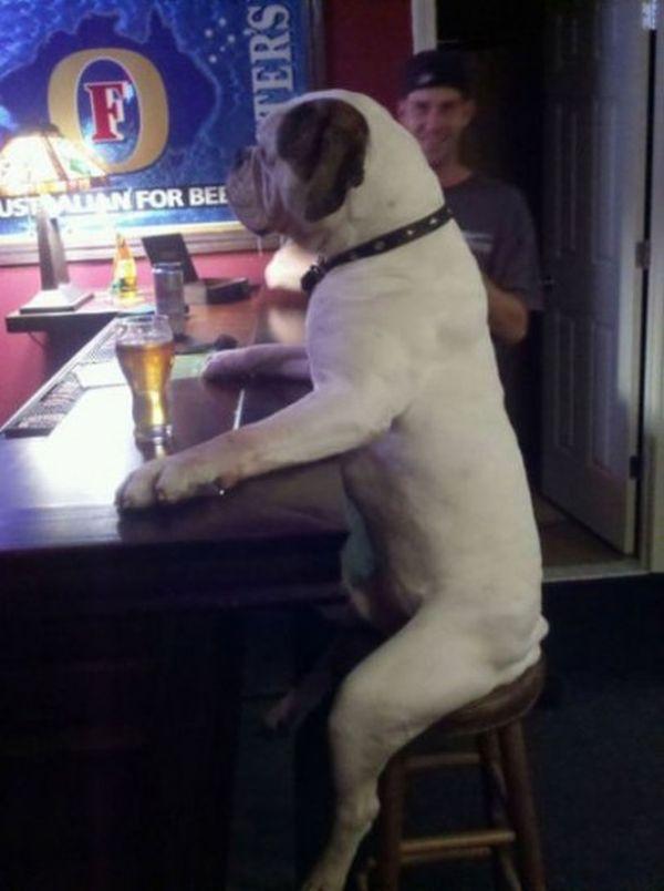 cane seduto al pub