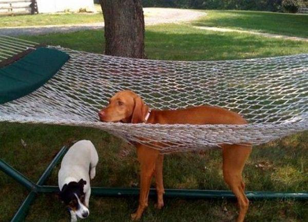 cane sull'amaca