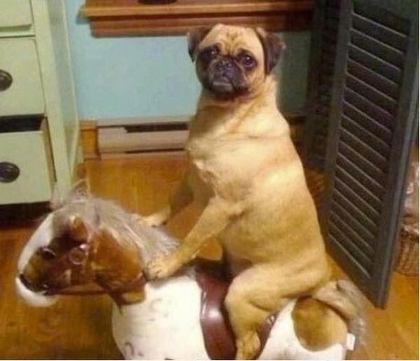 cane su un cavallo a dondolo