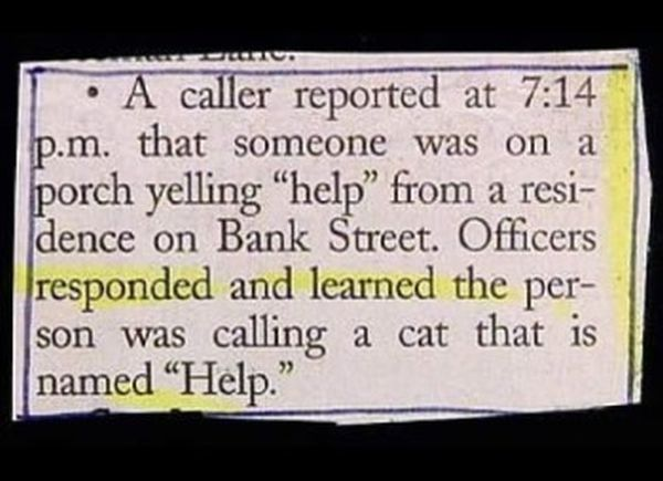 Cerco gatto Aiuto
