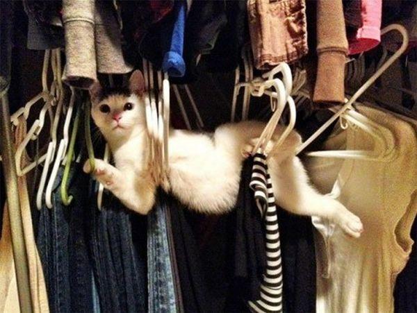 gatto nell'armadio