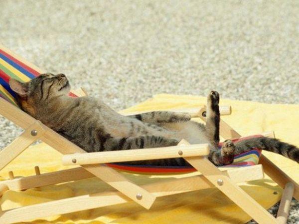 gatto sdraiato al sole