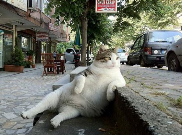 gatto spaparanzato