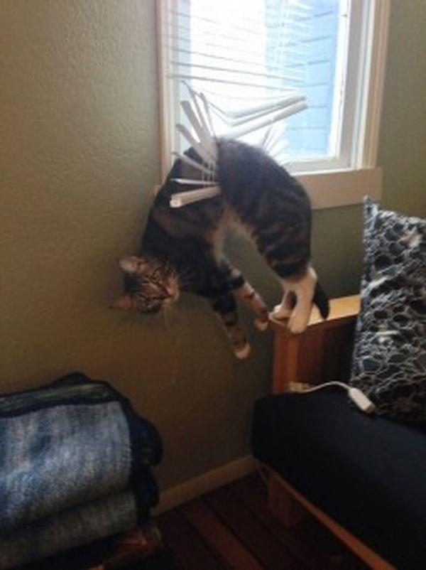 gatto sulle tapparelle