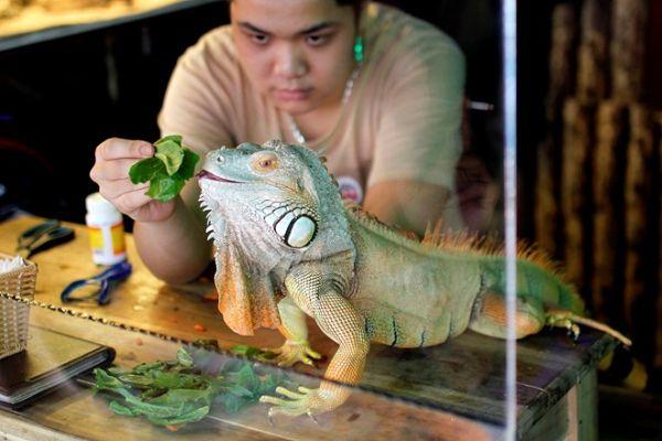 Pet Cafe 4