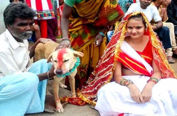 ragazza sposa un cane randagio 2