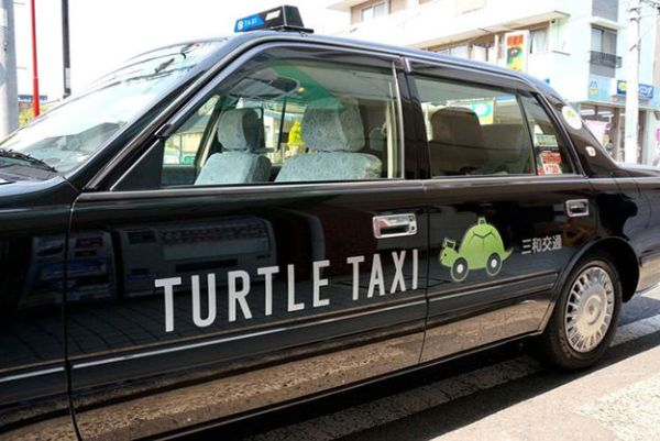 turtle-taxi 1