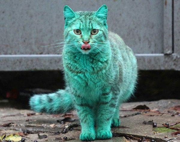 gatto verde Varna Bulgaria 1
