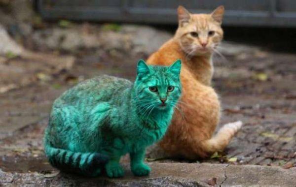 gatto verde Varna Bulgaria 2